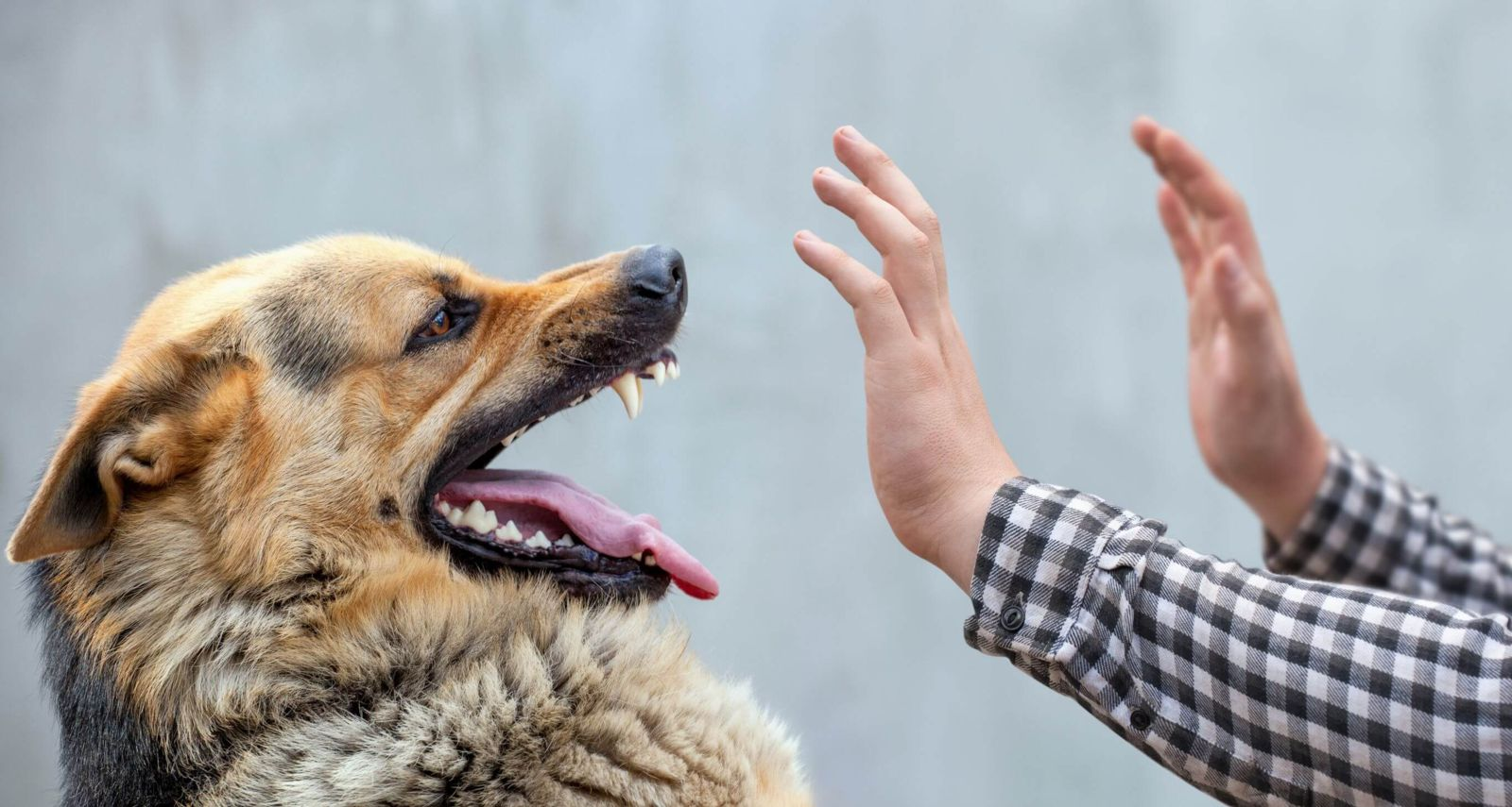 Handling A Missouri Dog Bite Lawsuit